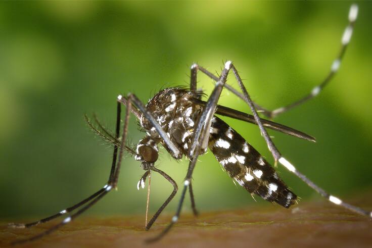 Укусы насекомых и защита от них.