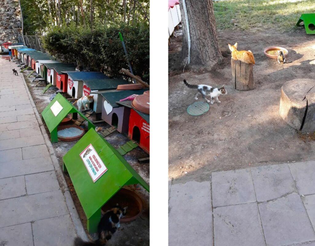 Анталия - город, где бездомные кошки хорошо живут